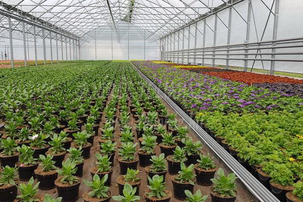 Növényasztal